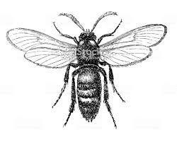 apiformes